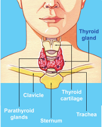 Get now Best thyroid treatment by Dr Venugopal Pareek, One of the best Thyroid Specialist Hyderabad